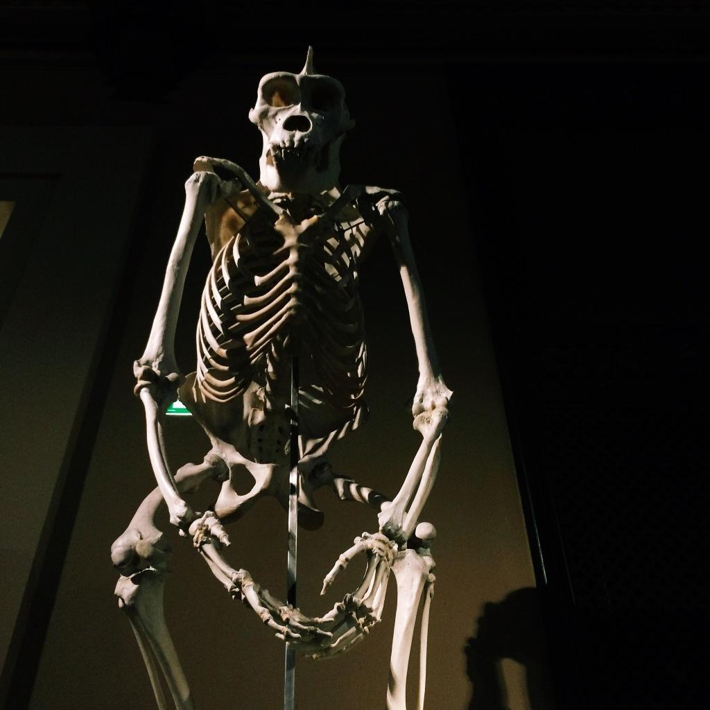 Skelett im Naturkundemuseum